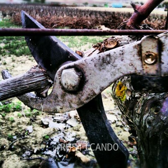 Poda en las viñas de Las Tablas, Jerez, Cádiz