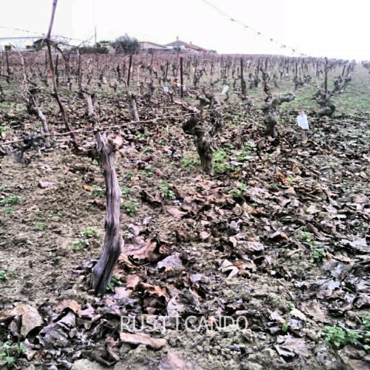 Rusticando: una viña en diciembre