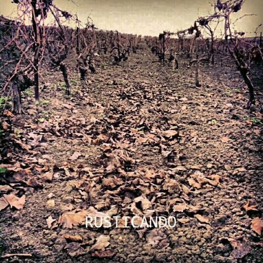 Rusticando: Una viña en invierno en las Tablas (Jerez, Cádiz)