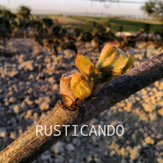 rusticando palomitas viña palomino jerez sherry 01