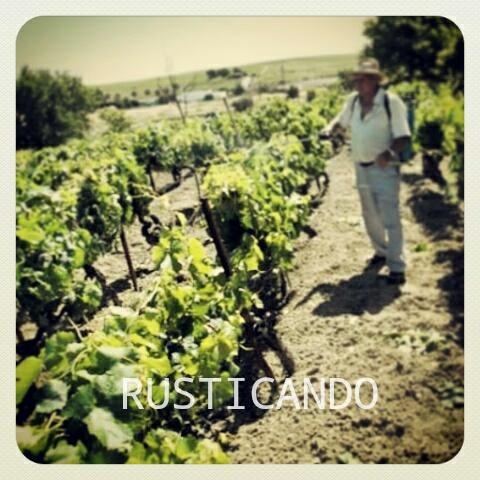 rusticando viñedo jerez sherry