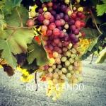 rusticando viñedo jerez sherry faenas
