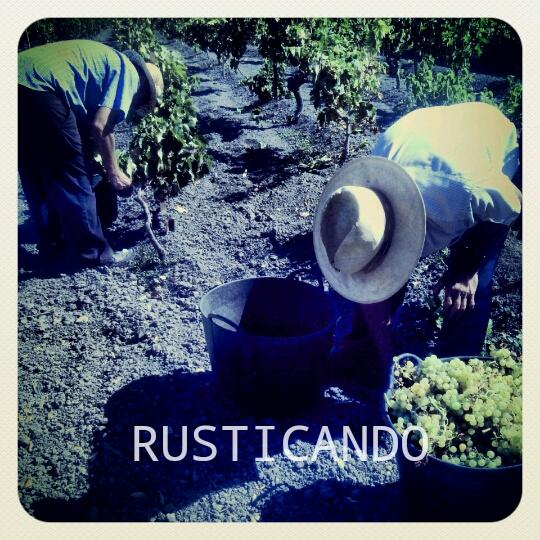 rusticando vendimia jerez sanlúcar 2014 03