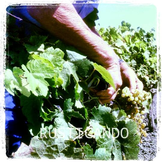 rusticando-vendimia-palomino-jerez-sanlucar-2014-01