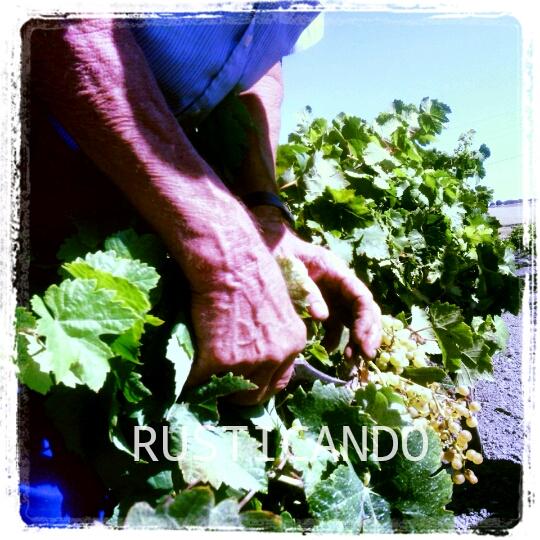 rusticando-vendimia-palomino-jerez-sanlucar-2014-02